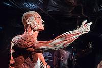 """Die Koerperwelten-Ausstellung des Plastinator Gunther von Hagens und seiner Ehefrau Dr. Angelina Whalley im Menschen Museum in Berlin Mitte.<br /> Im Bild: Das Plastinat """"Autopsie-Body"""". Gezeigt werden alle Muskeln, die direkt unter der Haut liegen.<br /> 17.2.2015, Berlin<br /> Copyright: Christian-Ditsch.de<br /> [Inhaltsveraendernde Manipulation des Fotos nur nach ausdruecklicher Genehmigung des Fotografen. Vereinbarungen ueber Abtretung von Persoenlichkeitsrechten/Model Release der abgebildeten Person/Personen liegen nicht vor. NO MODEL RELEASE! Nur fuer Redaktionelle Zwecke. Don't publish without copyright Christian-Ditsch.de, Veroeffentlichung nur mit Fotografennennung, sowie gegen Honorar, MwSt. und Beleg. Konto: I N G - D i B a, IBAN DE58500105175400192269, BIC INGDDEFFXXX, Kontakt: post@christian-ditsch.de<br /> Bei der Bearbeitung der Dateiinformationen darf die Urheberkennzeichnung in den EXIF- und  IPTC-Daten nicht entfernt werden, diese sind in digitalen Medien nach §95c UrhG rechtlich geschuetzt. Der Urhebervermerk wird gemaess §13 UrhG verlangt.]"""