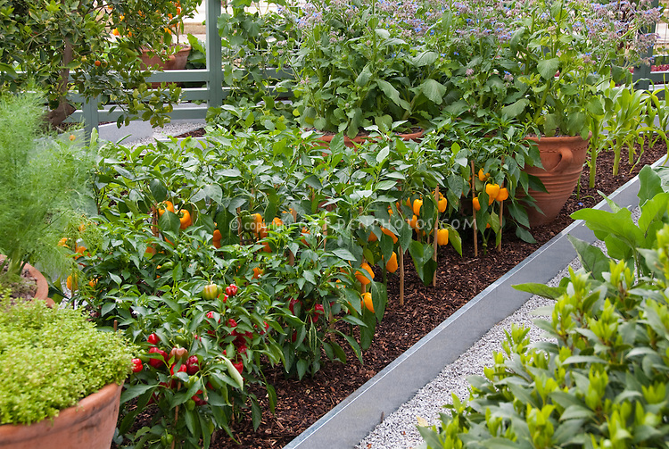 Rows of vegetables in raised beds in upscale backyard