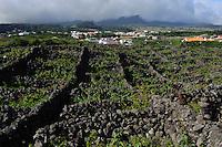 Weinanbau in Biscoitos auf der Insel Terceira, Azoren, Portugal