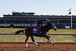 November 4, 2020: Abarta, trained by trainer Brad Cox, exercises in preparation for the Breeders' Cup Juvenile Turf at Keeneland Racetrack in Lexington, Kentucky on November 4, 2020. Gabriella Audi/Eclipse Sportswire/Breeder's Cup/CSM