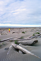 Haida Gwaii (Queen Charlotte Islands), Northern BC, British Columbia, Canada - Hiker beachcombing past Driftwood on South Beach along McIntyre Bay, Naikoon Provincial Park, Graham Island (Model Released)