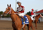 7 February 2009: Jockey Shaun Bridgmahon  and War Echo after winning the Silverbulletday Stakes on Risen Star Stakes Day at the Fair Grounds Race Course in New Orleans, Louisiana.