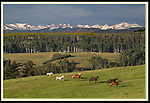Horse and the Rocky Mountains, Colorado, USA. Private guided tours to Indian Peaks. .  John leads private photo tours in Boulder and throughout Colorado. Year-round.