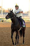 Holdin Bullets, trained by Wesley Ward and to be ridden by Jeffrey Sanchez , exercises in preparation for the 2011 Breeders' Cup at Churchill Downs on October 31, 2011.