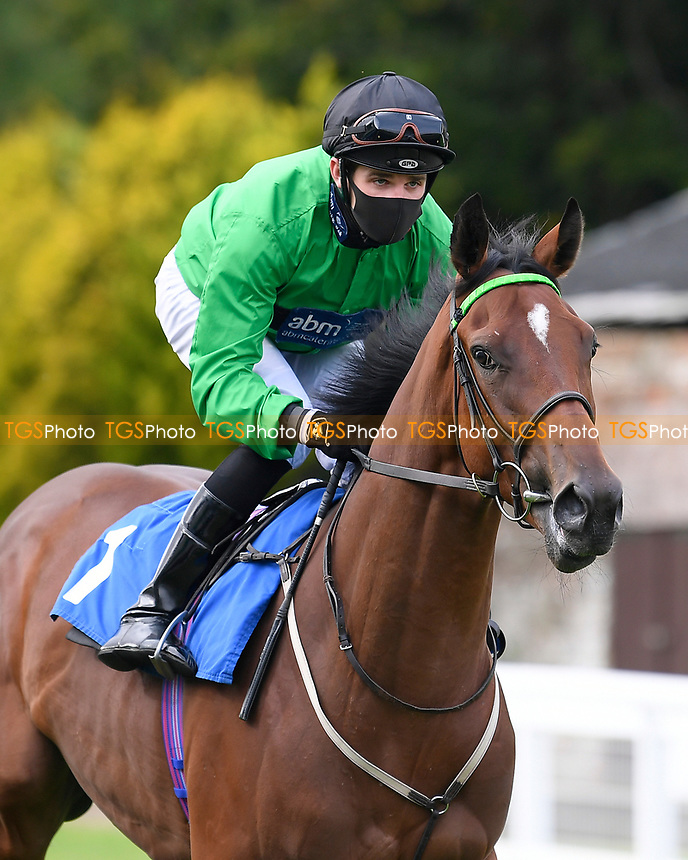 Tornadic ridden by Charles Bishop goes down to the start of The Radcliffe & Co Novice Median Auction Stakes (Div 1) during Horse Racing at Salisbury Racecourse on 11th September 2020