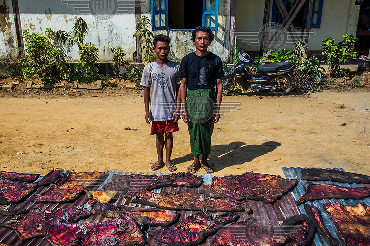 Two men suspected of being wild elephant poachers stand for photo documentation, together with the slices of dried elephant skin found with them, at the police station in Ngwe Saung. At least 115 wild elephants have beenslaughtered by poachers within the past five years in the dense jungles of Irrawaddy, Pegu Range (Bago Yoma), and the periphery of Yangon region, with a record high of 59 in 2017. This sudden spike led to increased support to the country's national plan to protect elephants and strengthened the response from the Myanmar government, international organizations such as WWF, and local CSOs. Campaigns such as Voice for Momos have been organized, and training has been given to forestry staff, mahouts, and the rangers of Myanmar's Emergency Elephant Response Unit. The increased anti-poaching patrols led to 15 arrests of poachers in 2017.