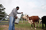 May 22, 2010. Baskerville, Virginia.. John Boyd, Jr. feeds the cattle on his farm that the family has owned for over 100 years.. Dr. John Boyd, Jr., a Virginia farmer, has lobbied the White House and Congress for the better part of two decades on behalf of black farmers. .A $1.25 billion settlement he helped to negotiate in February for the federal government to compensate black farmers has become ensnared in Washington. .Meanwhile, many elderly farmers who stand to benefit are dying before they can seek restitution..Their case, known as the black farmers settlement, and commonly referred to as Pigford II, is the second phase of a federal lawsuit settled in 1999. It covers more than 80,000 farmers who claim they were denied critical aid comparable to what white farmers received from the Department of Agriculture between 1981 and 1996 because of the color of their skin..Congress reopened the case in 2008, and set aside $100 million to address the late claims. President Barack Obama, who co-sponsored the 2008 measure when he was in the Senate, created a $1.15 billion line item in his budget for the 2010 fiscal year to cover the new class of litigants..The money was less than half of the $2.5 billion the farmers had fought for, but the administration's promise of a quick resolution prompted them to accept the deal.  .