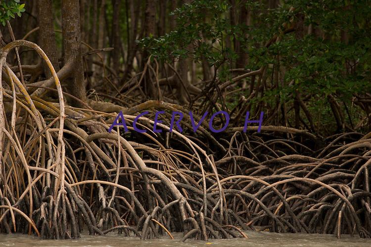 Manguezal próximo da praia do Paxicú na Reserva Extrativista Marinha Mãe Grande de Curuçá  situada no município de Curuçá (PA), na Região do Salgado, no nordeste do Pará, que abrange aproximadamente 37 mil hectares de estuário - região onde as águas de rios interagem com o oceano - e é povoada por famílias de cerca de seis mil pescadores, divididas em 49 pequenas comunidades instaladas em ilhas, furos, rios e praias da região Curuça, Pará, Brasil  Foto Paulo Santos17/02/2010