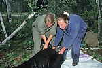 Gitte Andersen & Kris Timmerman Working On Black Bear