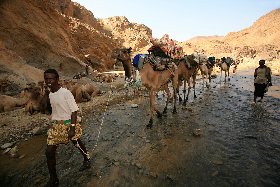 All the caravans stop at the Afar village of Asso Bollo, at the end of the canyon leading to Berahile, the main market town for the Afar caravans..