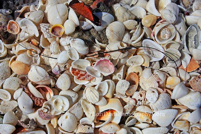 Sea Shell Mix