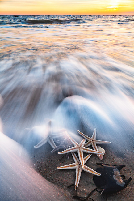 Sunset surf and sea star, Cape Point