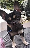2019 09 27 Stolen Dog  Cardiff, Wales, UK