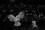 """Flight""<br /> Bird Display<br /> Museum of Natural History<br /> Paris, France<br /> From the ""Captivity"" series<br /> © Thierry Gourjon-Bieltvedt"