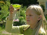Mädchen beobachtet gefangenen Schmetterling in Becherlupenglas, Becherlupe, im Garten, Tagpfauenauge, Aglais io, Inachis io, Nymphalis io, peacock moth
