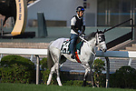 SHA TIN,HONG KONG-DECEMBER 09: Smart Layer,trained by Ryuji Okubo,is walking on the turf track in preparation for the Hong Kong Vase at Sha Tin Racecourse on December 9,2016 in Sha Tin,New Territories,Hong Kong (Photo by Kaz Ishida/Eclipse Sportswire/Getty Images)
