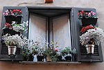 Window with flower pots and flowers in the Trastevere district of Rome.