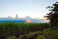 West Maui sunset through sugar cane fields