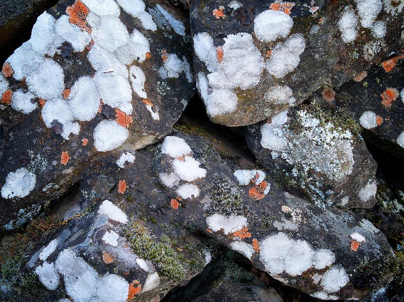 Pattern of rock lichens. Columbia River Gorege National Scenic Area, Oregon