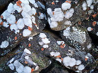 Pattern of rock lichens. Columbia River Gorege National Scenic Area, Oregon