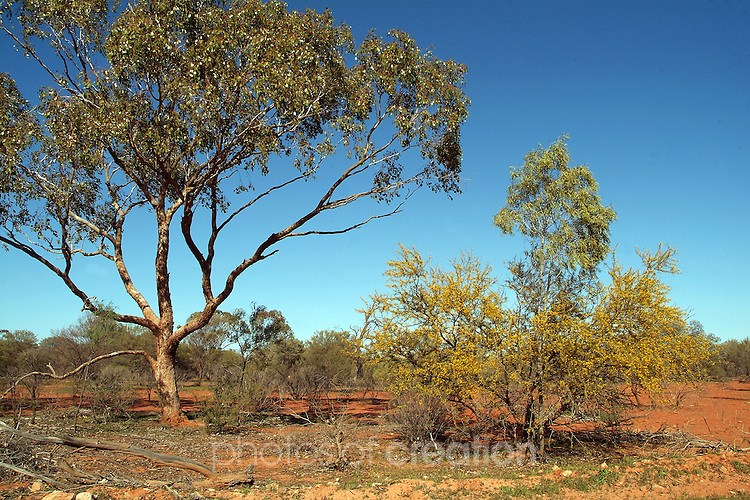 Sturt National Park - Outback New South Wales -<br /> Tibooburra