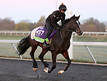 Kameko, trained by trainer Andrew M. Balding, exercises in preparation for the Breeders' Cup Mile at Keeneland Racetrack in Lexington, Kentucky on November 2, 2020.