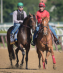 JUNE 7, 2016: Exaggerator, ridden by Kent Desormeaux, during warmups on the Race Track at Belmont Park on June 7, 2016 in Elmont, New York (Photo by Douglas DeFelice/Eclipse Sportswire/Getty Images)
