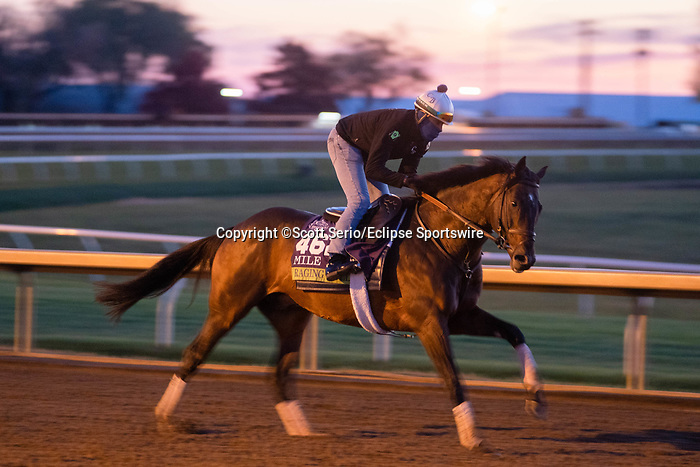 November 5, 2020: Raging Bull, trained by trainer Chad C. Brown, exercises in preparation for the Breeders' Cup Mile at Keeneland Racetrack in Lexington, Kentucky on November 5, 2020. Scott Serio/Eclipse Sportswire/Breeders Cup/CSM