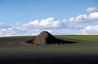 Glacial erratic of basalt in field of green wheat. agricultural landscape, geology, rock formations,. Washington.