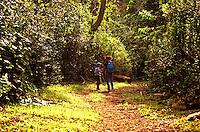 Hikers on Makiki trail, Tantalus, Oahu
