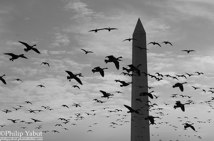 Hundreds of geese descend upon Constitution Gardens.