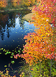 Chequamegon National Forest, WI<br /> Fall colored maples frame a black pool with lilly pads and forest reflections on the Brunsweiler river