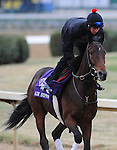 3 November 2010:  Air Support, trained by Claude R. McGaughey III and to be ridden by jockey Rajiv Maragh, works out for the 2010 Breeders Cup at Churchill Downs in Louisville, Kentucky.(Scott Serio/Eclipse Sportswire)