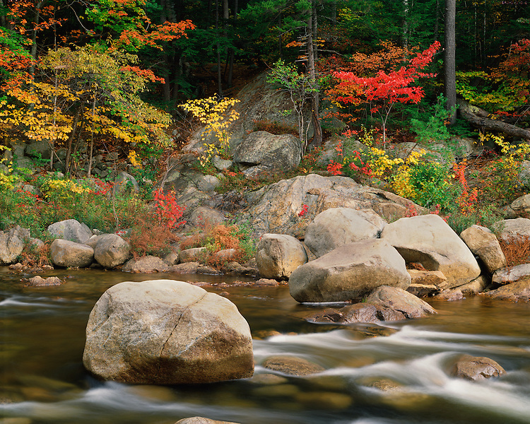 Forest in fall color along the Swift River; White Mountains National Forest, NH