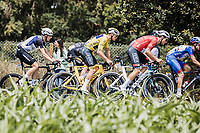yellow jersey Mathieu van der Poel (NED/Alpecin Fenix) and Swiss national champion Silvan Dillier (SUI/Alpecin-Fenix). in the peloton<br /> <br /> Stage 4 from Redon to Fougéres (150.4km)<br /> 108th Tour de France 2021 (2.UWT)<br /> <br /> ©kramon