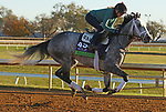 Halladay, trained by trainer Todd A. Pletcher, exercises in preparation for the Breeders' Cup Mile at Keeneland Racetrack in Lexington, Kentucky on November 4, 2020.