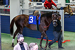 #3, Last Samurai in the paddock for the Southwest Stakes (Grade III) at Oaklawn Racing Casino Resort in Hot Springs, Arkansas. Ted McClenning/Eclipse Sportswire/CSM