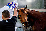 HALLANDALE BEACH, FL - JANUARY 25: Gun Runner gets a bath after morning workouts as horses prepare for the Pegasus World Cup Invitational at Gulfstream Park Race Track on January 25, 2018 in Hallandale Beach, Florida. (Photo by Scott Serio/Eclipse Sportswire/Breeders Cup)