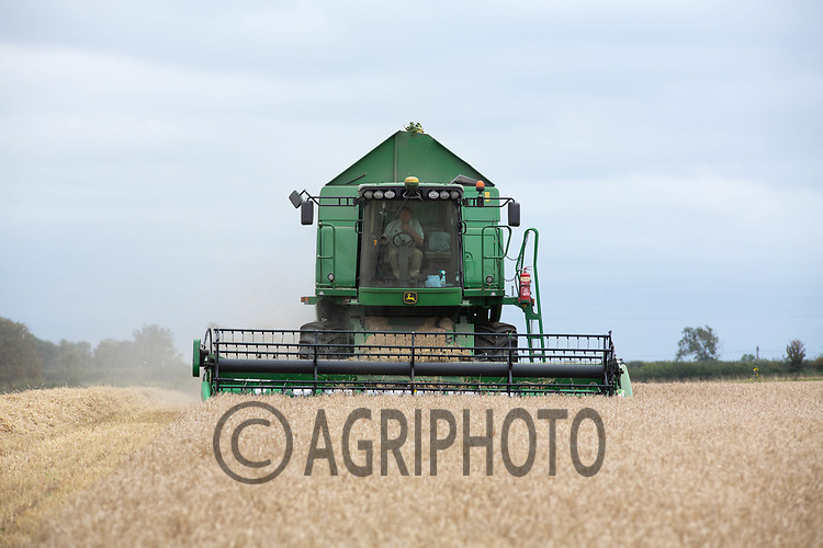 7.9.2020 Harvesting Spring Barley in Lincolnshire <br /> ©Tim Scrivener Photographer 07850 303986<br />      ....Covering Agriculture In The UK.