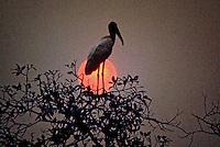 Viveiro de passaros no Parque Nacional do Pantanal Matogrossense. Mato Grosso. Foto de Juca Martins.