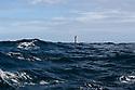 Ile d'Ouessant - Bretagna, 26 agosto 2020.  Faro de la Jumente.