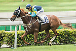Jockey C Y Ho riding Jolly Gene competes the Race 2 - Southern Ocean Handicap  on 07 May 2017, at the Sha Tin Racecourse  in Hong Kong, China. Photo by Chris Wong / Power Sport Images