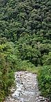 Small stream and mid-altitude montane rainforest. Manu Biosphere Reserve, Amazonia, Peru.