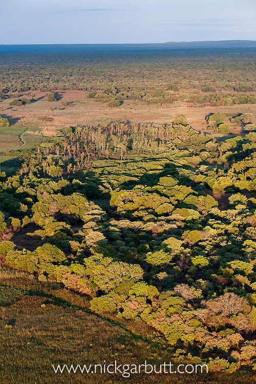 Aerial view of the distinct patch of 'Mushitu' (ever-green swamp forest) where millions of Straw-coloured fruit bats (Eidolon helvum) roost during the day. Kasanka National Park, Zambia. November 2013.