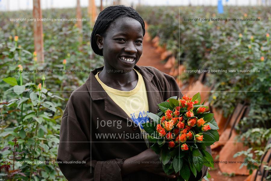 KENYA Thika near Nairobi, Simbi Roses is a fair trade rose flower farm which produces rose as cutting flowers for export to europe, worker in greenhouse / KENIA Thika bei Nairobi, Simbi Roses ist eine fairtrade zertifizierte Blumenfarm die Rosen fuer den Export nach Europa anbauen, Plueckerin im Gewaechshaus