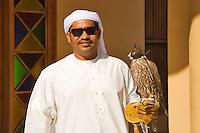 Dubai.  Hooded Saker Falcon, bred for hunting,  perches on owner?s glove.   Falco Cherrug. Altai Falcon..