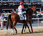 Awesome Slew in the post parade as Whitmore (no. 3) wins the Forego Stakes (Grade 1), Aug. 25, 2018 at the Saratoga Race Course, Saratoga Springs, NY.  Ridden by  Ricardo Santana, Jr., and trained by Ron Moquett, Whitmore finished 1 1/2 lengths in front of City of Light (No. 8).  (Bruce Dudek/Eclipse Sportswire)