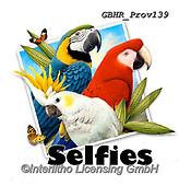 Howard, SELFIES, paintings+++++selfie parrots,GBHRPROV139,#Selfies#, EVERYDAY