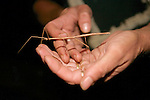 Stick Insect