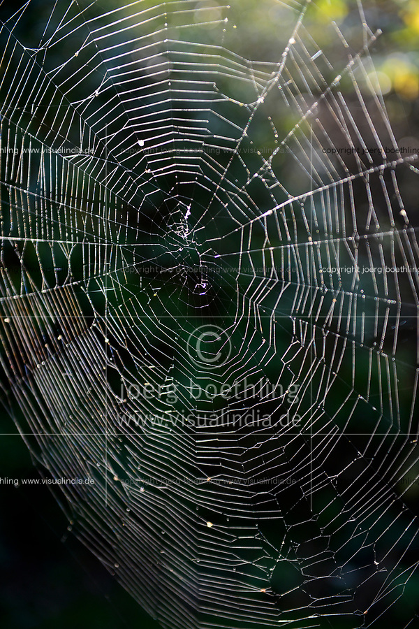 GERMANY, Plau, forest, spider net / DEUTSCHLAND, Plau, Wald, Spinnennetz